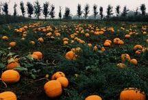Autumnal Scent