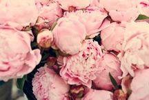 - fleurs -