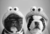 Furry Friends / Our best friends!