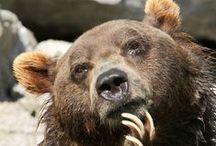 Beautiful Bears :-)