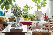 Home - Potplants