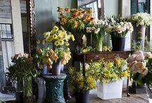 +++flower+shop+++ / Flowers. Flower shops