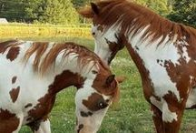 HORSES OF A DIFFERENT COLOR / by Leslie Wood