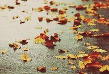 _fall