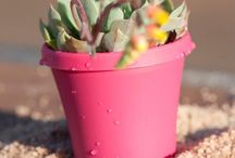 Succulent Color Pot / Succulent Colour Pot