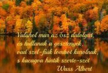 ŐSZ / Az ősz kezdetének (mint a többi évszaknak) három időpontja van:  a naptári ősz szeptember elsején kezdődik, az ősz hónapjainak (szeptember, október, november) figyelembe vétele miatt, a meteorológiai ősz a lombhullató növények leveleinek elsárgulásával és az idő lehűlésével kezdődik, a csillagászati ősz kezdete az őszi napéjegyenlőség napja: szeptember 23. A csillagászati ősz szeptember 23-ától december 22-éig tart.
