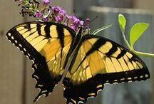 Butterflies / #butterfly, #beautiful, #delicate