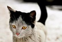 :: Cat Love ::