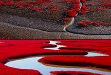 Red Hot destination / red images of nature, air, land and sea