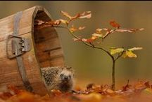Herfst // Autumn