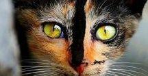 Gatos no Gatil / Idéias para manter seus pets sempre seguros Seu gatinho mais seguro em casa!