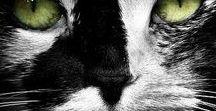 Adote um gatinho . Adopt a cat . Adopciones Felinas / Publicação para adoção