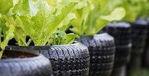 Hortas & Jardins Urbanos / Hortas, receitas vegetarianas, energia sustentável, alimentos orgânicos, vegetarians foods, urban agroecoloy