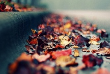 Autumn crisp air