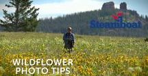 Steamboat Videos / Steamboat Resort's videographer shares his best videos of Steamboat Springs, the ski area and the surrounding Colorado landscape. This board also features videos shared with us by our fans.