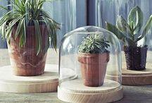 Cactus & plantes