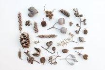 Pods & Seeds