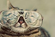 Sassy Felines / Fabulously fun photos of furry felines!