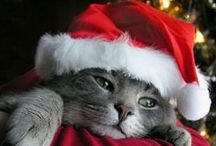 Merry Catmas / Christmas cat photos & ideas for celebrating the Holidays with our furry friends!