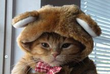 Fashion for Our Cats / Cats dressed fabulously.