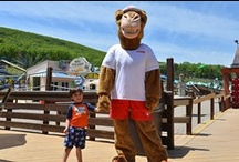Chuck the Camel / Meet Camelbeach's family-friendly mascot, Chuck!