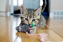 Natural Cat Products / Eco-friendly pet products & eco-friendly life
