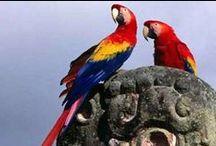 Latin America | Travel the World