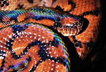 Reptiles / by Diego Saavedra