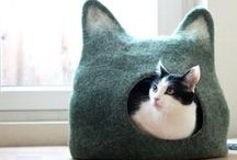 Cat Beds / Need a cat bed? We have options.