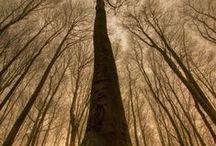 Three is a Tree