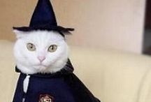 Halloween Cats / Because who doesn't love a cat in costume?!