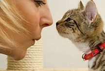 Sharing the sWheat Life / This board is dedicated to the love that you have and share with your cats.