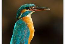 Oiseaux de jardin / Découvrez les oiseaux que vous pouvez croiser dans votre jardin. Aussi insolites les uns que les autres ! Retrouvez nos produits consacrés aux oiseaux sur notre site marchand : http://www.jardinerie-bergon.fr/192-oiseaux