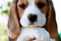 Cute animals / Cute!!!!!!!!!!!!!!!!!!