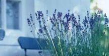 kleine Wünsche* / Für die Küche ☕️ Espressokocher für min. 3 Tassen, Nudelzange-/kelle *** Gesichtspflege  Dr. Hauschka Tagescreme, Maske Quitte/Melisse *** Für meinen Balkon  ein Strauch Rosmarin oder Lavendel *** kleine Creole für Traguspiercing.  Eure Nadine