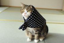 ねこさんの世界 / 猫、癒し。♡