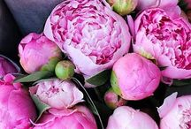 Wedding flowers: Peonies / Perfect peonies! A wedding favourite but with a short season so a late spring-early summer wedding is a must if your hearts set on these blowsy beauties.