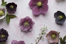 Wedding flowers: Hellebores / Beautiful, delicate hellebores are perfect for a winter wedding