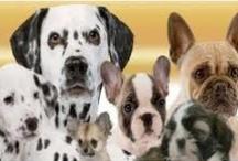 Razas De Perros / Algunas Razas De Perro