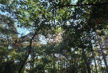 Woods / Woods