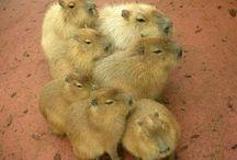 cute animales