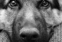 Photography of animals B&W / Animals in black and white pictures
