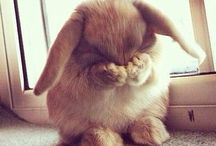 So cute !!!!