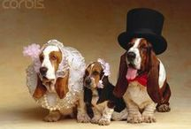 I Couldn't Resist,...Bassett Hounds Galore! / My love for Bassett Hounds will always live with me.