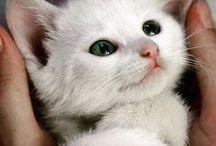 des chatons trop mimi / chat