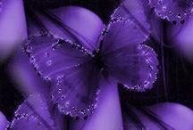 le violet ma couleur préférée