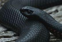 serpent / ...