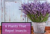 Garden Pests and Cures