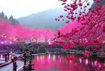 It΄s a beautiful  beautiful world!!!!!