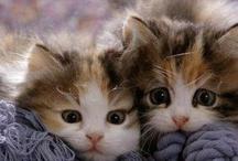 Kitties / by Tess Cat